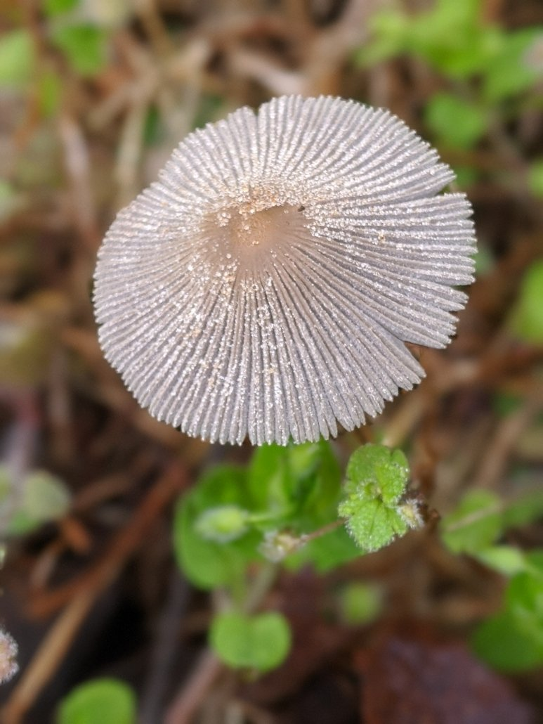 March 2020: Close-up Picture of a Mushroom